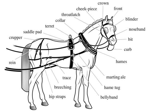Harness      Saddle Making